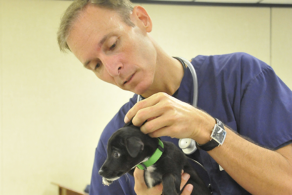 Annual low-cost pet vaccination event returns to San Jacinto College